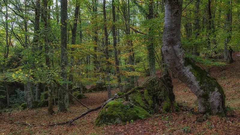 Monte Hijedo, un bosque compartido por Burgos y Cantabria
