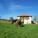 casa rural Cantabria 20 personas
